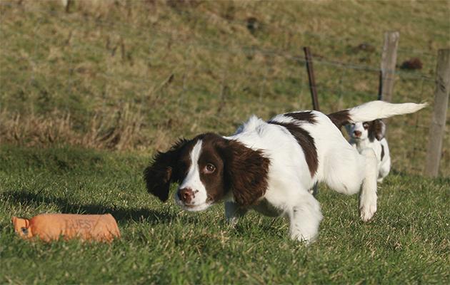 Dog Training Formby